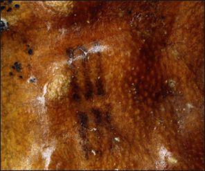 20120207-Otzi Museum tattoo.jpg