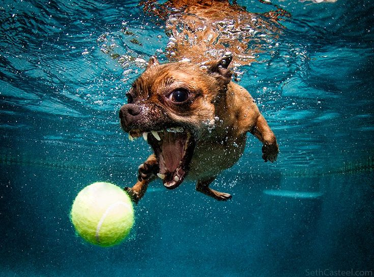 133 Best Images About Underwater Dogs On Pinterest Swim