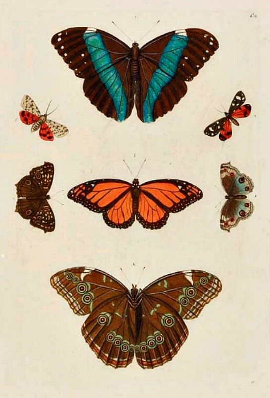 All About Butterflies♥ :: Page 10 :: Torrents.Md - BitTorrent Tracker Moldova