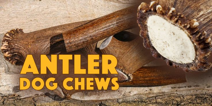 Antler Dog Chews: Safe, Healthy & Everlasting Chews For Dogs!  Antler dog chews or stagbars are a hot topic in the dog world these days. They revolutionized chews for dogs as we've known them up until now (ie. rawhide, nylabones, bully stix, etc.)
