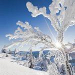 Frozen tree in the sunlight