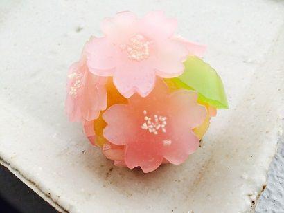 桜だより Sakura dayori - Letter from cherry blossoms