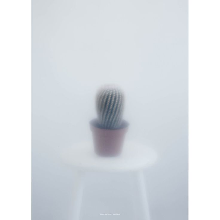 Ball Cactus II  poster, 50x70 i gruppen Posters / Posters / Fotografier hos RUM21.se (131267)