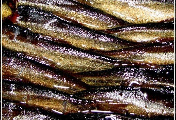 18 рецептов из шпрот      1. Шпроты по-домашнемуИнгредиенты:1 кг мелкой рыбы (мойва, салака, килька)1 кг репчатого лука20 горошин черного перца1 ч. л. французской горчицы2 стакана растительного масла1/4 стакана уксуса1 …