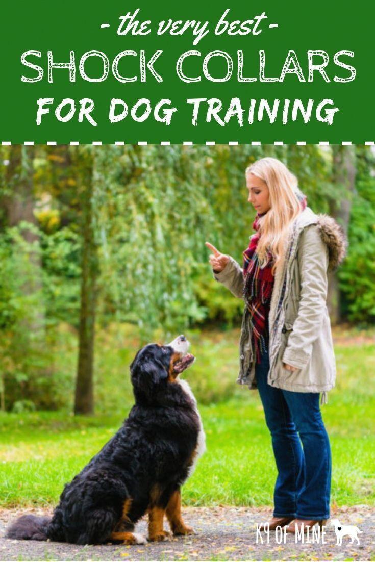 Tense Train Dog For Sale Doggies Dogcollarproducts Dog Shock