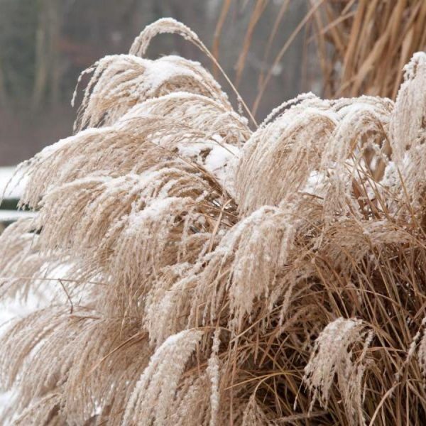 Bunter Herbst Im Garten Maschinenring Oberosterreich Blog Garten Herbstpflanzen Besenheide