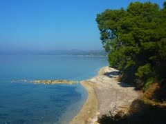 Sea and pines in Elia beach Nikiti