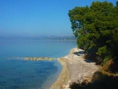 Sea and pines in Elia beach Nikiti
