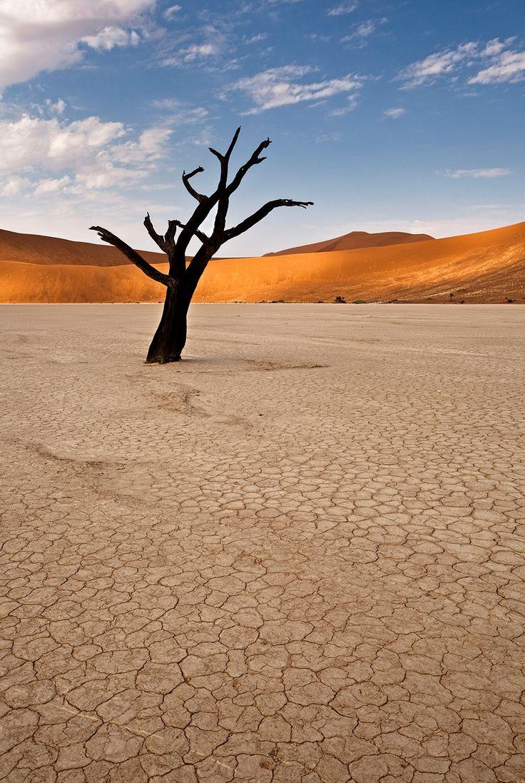 FLEMMING BO JENSEN – Solitary Twisted Tree