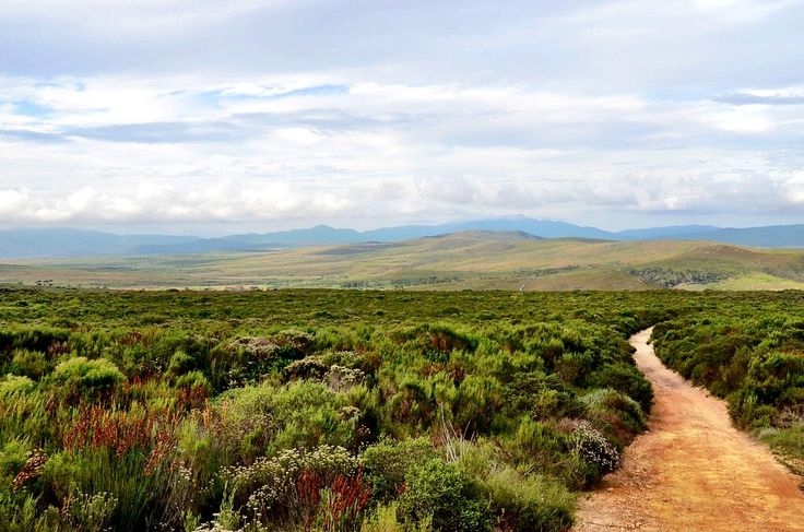 Mountain Road Through The Fynbos in Overberg, South Africa
