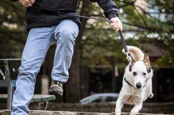 Cammino e corro col cane #agility #corsa #coi #cani #cani #dog #sitter