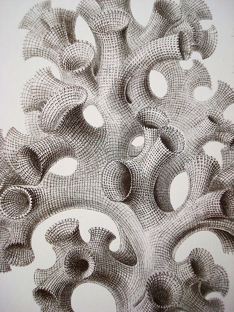 Ernest Haeckel46 by Neville Trickett, via Flickr