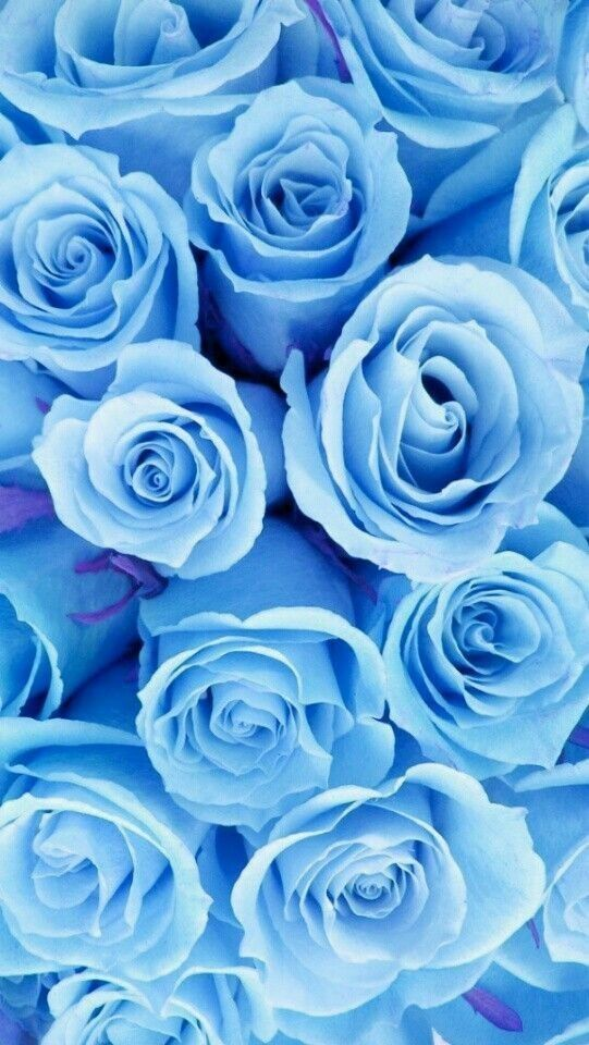 Pin By Pearl Aranda On Beautiful Roses Blue Wallpaper Iphone