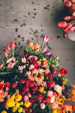17 best ideas about tulip season on pinterest spring for What season are tulips