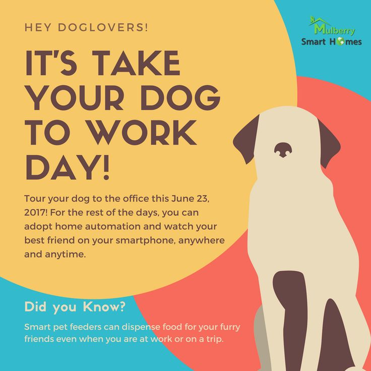 For the rest of the days harness the power of Home Automation. Watch, Feed, Monitor...everything is possible!  #TakeYourDogToWorkDay 🐶🐶🐶