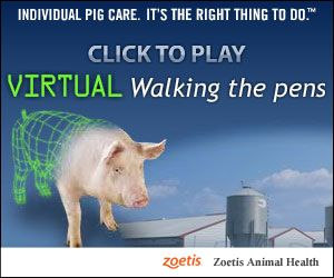 Virtual Walking the Pens - Walk The Pens Simulation Game - By Zoetis Animal Health - The Pig Site