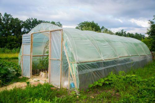 UV5-Gewaechshausfolie-Gartenfolie-Tunnelfolie-Tomatenhaus-200my-6m-Breite