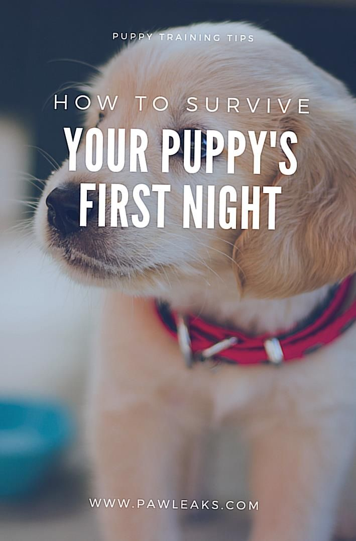 If You Want To Survive Your Puppys First Night At Home You Should Establish A Puppy Schedule And Use In 2020 First Night With Puppy Puppy Training Puppy Training Tips