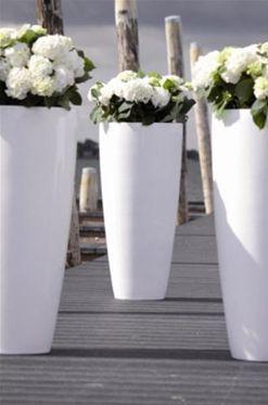 witte bloempotten met witte bloemen