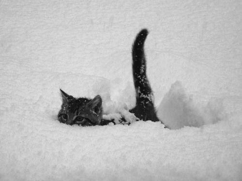 The snows a little deep today.