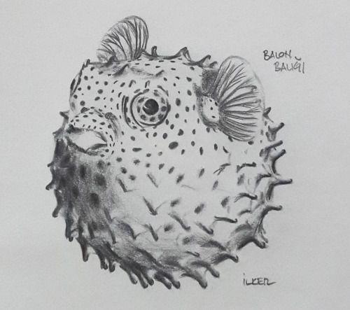 Balon balığı |Kurşun kalem 2B,6B,8B - Uçlu kalem 0,5mm 2B