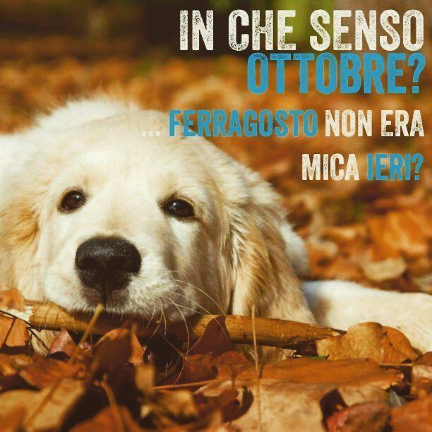 È già ottobre  Buon weekend a tutti! Che programmi avete per il vostro bau in questi giorni? . . #BauSocial #Milano #cane #cani #dog #dogs #italia #ottobre #autunno #october #autumn #leafs #leaf #park #parco #igersmilano #puppy #labrador #retriever #cucciolo