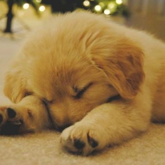 Pin By Alison Jeitani On Puppies Kitties Puppies Cute Animals Cute Dogs