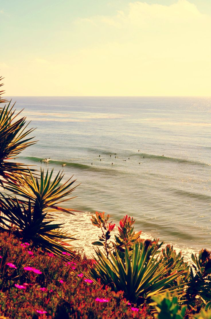 75 Best Images About Encinitas Ca On Pinterest Surf Cas And San Diego