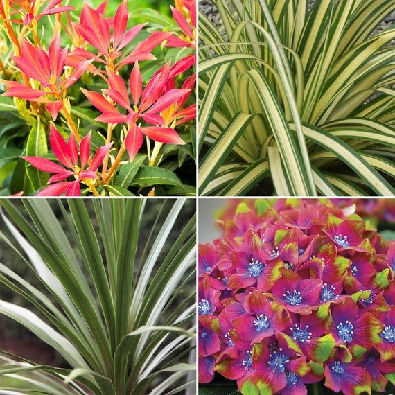 Mixed Garden Plants High Quality Established Plants In Pots Uk