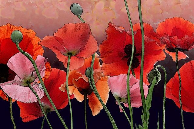 Dorothy Freudenberg Digital Art Media Gallery | Dorothy Freudenberg Fine Art