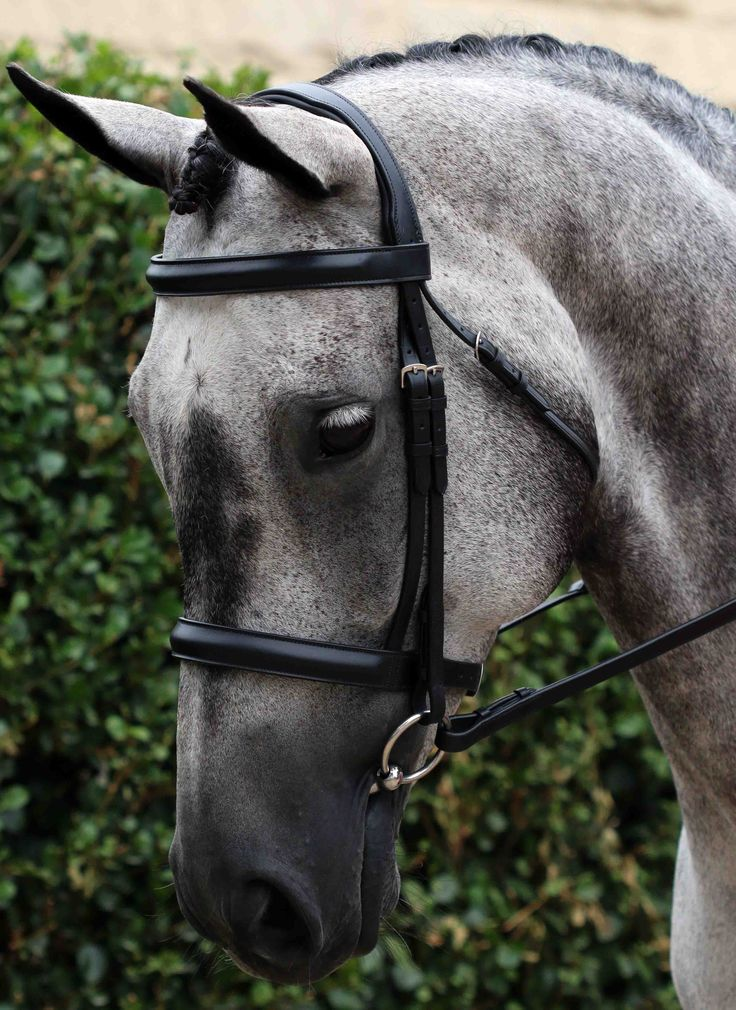 Flexi-Fit Gel Show English Leather Snaffle Bridle Black With Stainless Steel Fittings - Snaffle Bridles - Bridles | Flexible Fit Equestrian