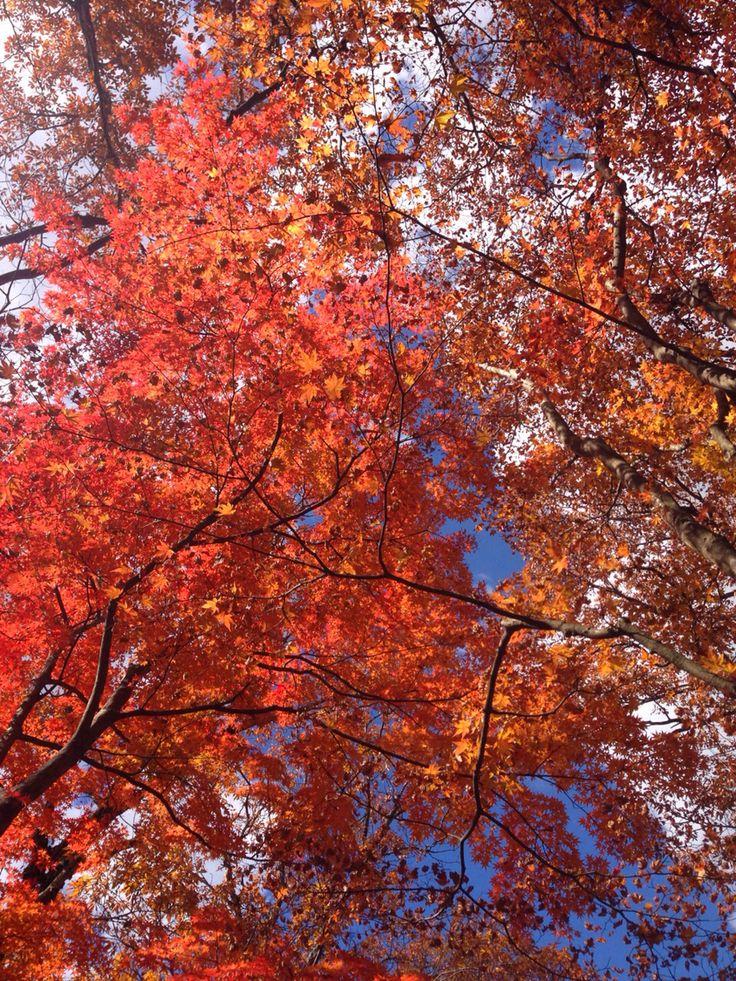 2015.秋 #日本 #紅葉 #那須