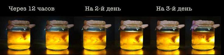 Таймлапс выращивания чайного гриба
