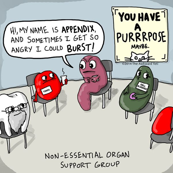 64 Best Anatomy Humor Images On Pinterest Funny Stuff Anatomy And
