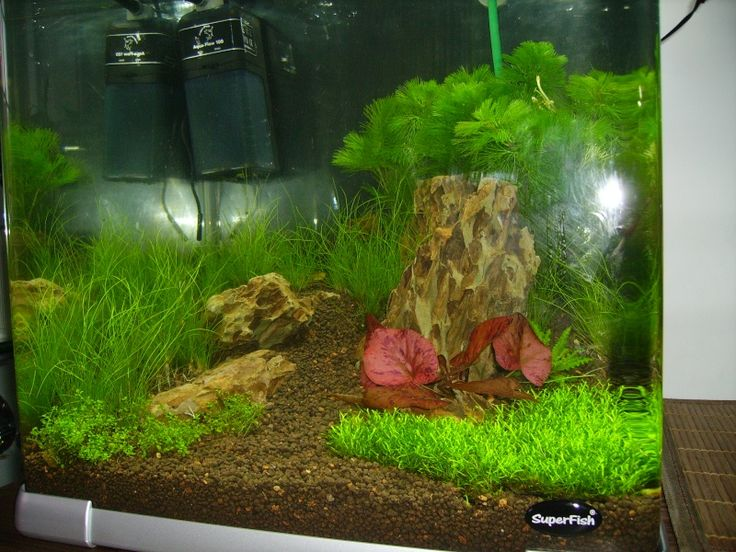 ... Dennerle 30 L et 35 ... Aquascaping Pinterest Tumblr