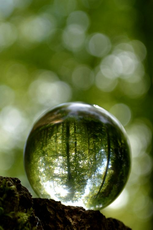 The world globes itself in a drop of dew. ― Ralph Waldo Emerson.
