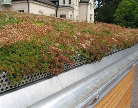Det blir allt mer populärt med grönskande tak av olika slag. Allt du behöver veta om du vill anlägga ett sedumtak.
