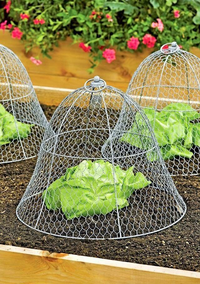 Great Gardening Ideas For The Summer Season! Garden Easy Ideas