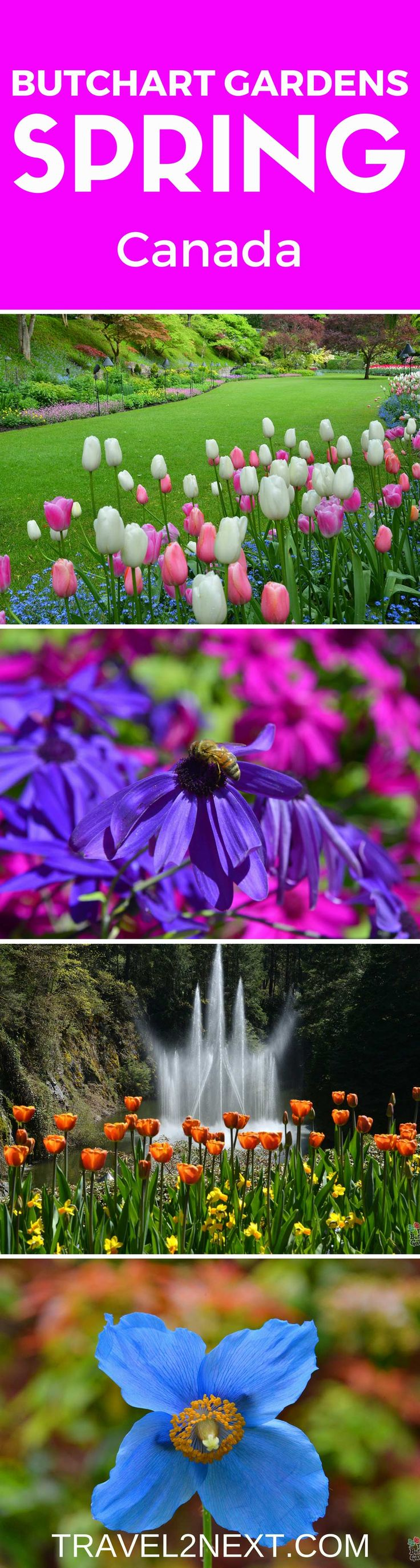 Butchart Gardens Canada – Garden For All Seasons. The Butchart Gardens Victoria BC is an ideal backdrop to while away the time.