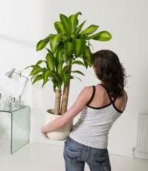 27 best images about plantas para interiores on pinterest - Plantas para interiores ...