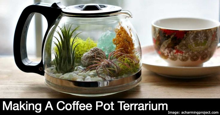 """This terrarium project by Enid of A Charming Project was inspired by her grandmother who she describes as a """"classy lady"""" that loved roses, houseplants and an afternoon coffee. Enid, shares wonderful memories of the love her grandmother had for her plants and coffee. She wanted... #fal #spr #sum"""