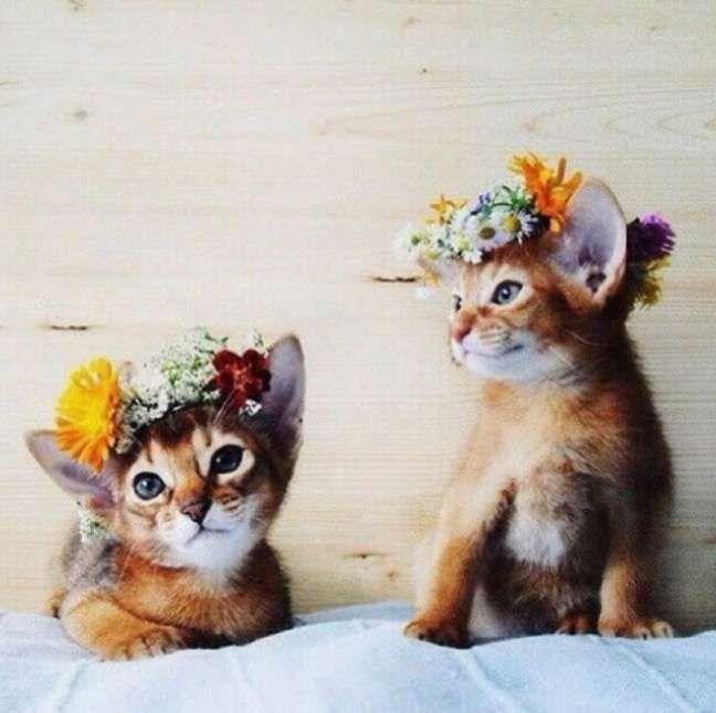 Trajes de gatos para bodas: Mejores ideas (Foto) | Ellahoy