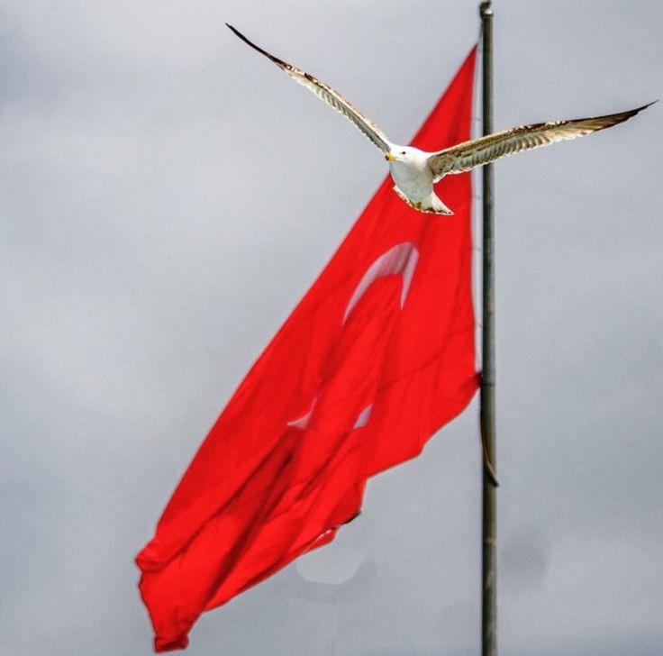 Türkiye Türk Bayrağı YaseminAksu