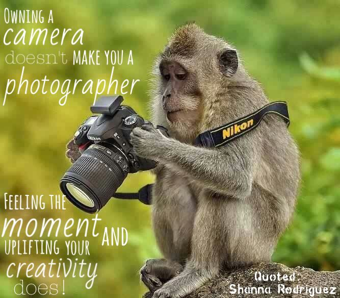 Dslr Camera Funny Quotes: Quote About Photographers! #photography #quotes #love
