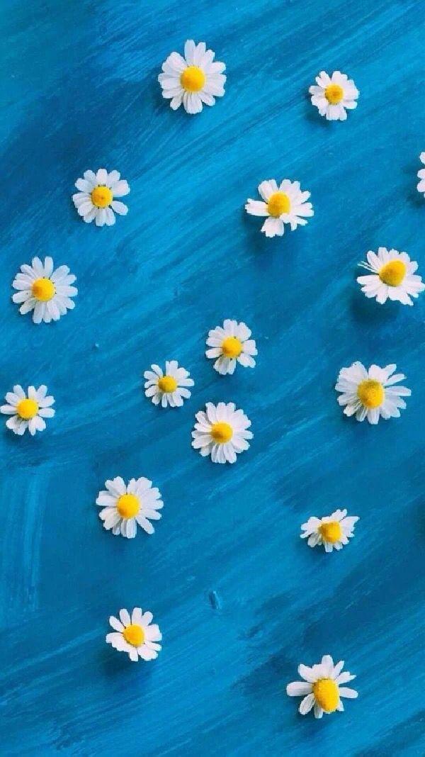 Daisies And Blue Background Wallpaper ShelvesCellphone