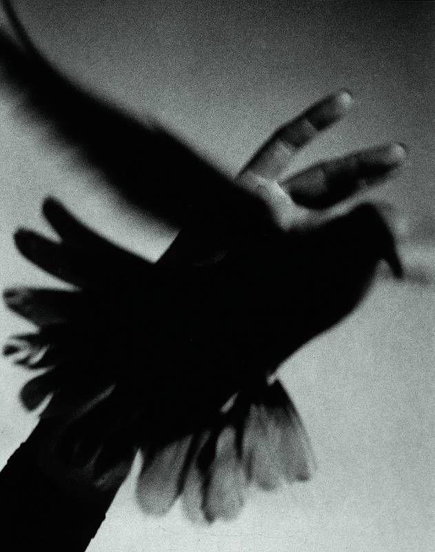 Pierre Jahan • Envol d'une colombe, 1948.