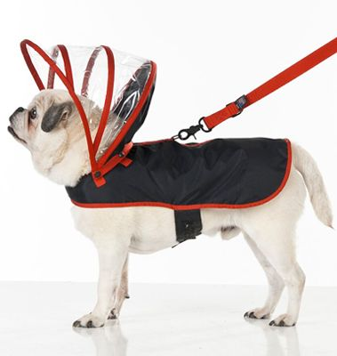 How cute is this dog raincoat from puddypooch.co.uk? Check out Create Staff Picks here for more autumn must haves: https://www.create.net/blog/134129-create-staff-picks-autumn-must-haves.html