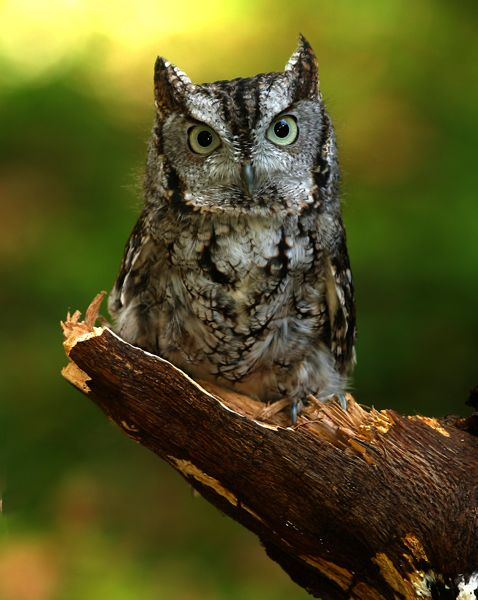 Totem.  Those with owl in their totem should practice silence, keeping silent and going about your business will bring you the most success. Ha that may be hard for me! but not really means do and don't talk it and about it much!