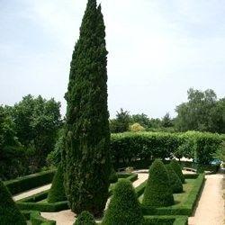 Conifère symbolique ! Symbole des jardins du Sud de la France et d'Italie, le Cypres de Provence est un bel arbre colonnaire donnant de la structure au paysage. Où planter Le Cyprès de Provence? Très tendance au bord d'une piscine, on plante le Cypres de Provence à l'entrée d'une allée, près d'une maison ou d'une terrasse.On se sert aussi du Cypres de Provence pour border un chemin. Il se plaîttrès bienen pot sur le balcon ou la terrasse. Onplantait autrefois les ...