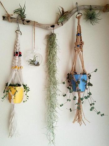 こちらは流木にS字フックで植木鉢を吊り下げて。